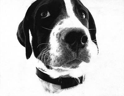 Duncan - Pointer Art Print by Justin Clark