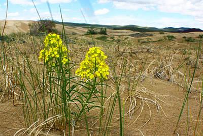 Photograph - Dune Flowers 1 by Jon Emery