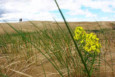 Photograph - Dune Flowers 2 by Jon Emery