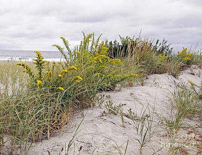 Photograph - Dune Garden by Denise Pohl