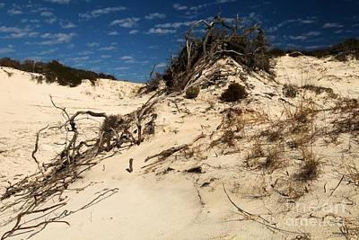Photograph - Dune Glue by Adam Jewell