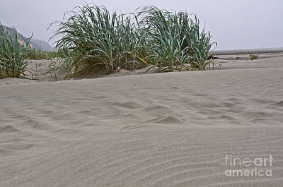 Photograph - Dune Grass On Beach Dune Landscape Art Prints by Valerie Garner