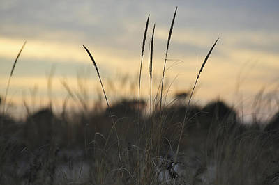 Photograph - Dune Grass by Terry DeLuco