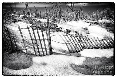 Photograph - Dune In Winter by John Rizzuto