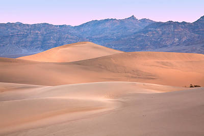 Photograph - Dune by Peter Tellone