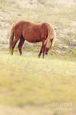 Glass Eyed Pony Photograph - Dune Stallion by Lyndsey Warren