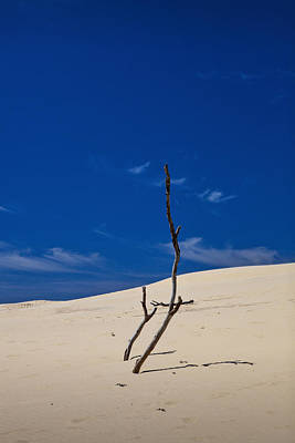 Photograph - Dune With Dead Trees by Randall Nyhof