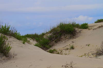 Dunes And Grasses 8 Art Print by Cathy Lindsey