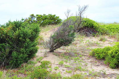 Beach Grass Photograph - Dunes And Grasses by Cathy Lindsey