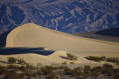 Photograph - Dunes At Dawn 4 by Michael Courtney