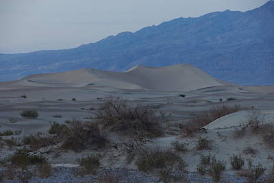 Photograph - Dunes At Dusk by Michael Courtney