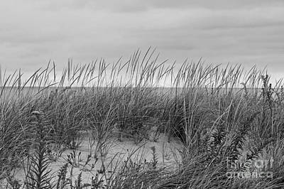 Photograph - Dunes by Denise Pohl