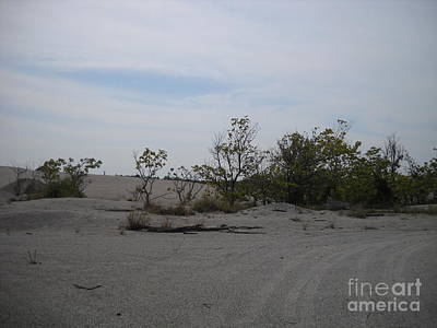 Photograph - Dunes Of Oklahoma by Mark McReynolds