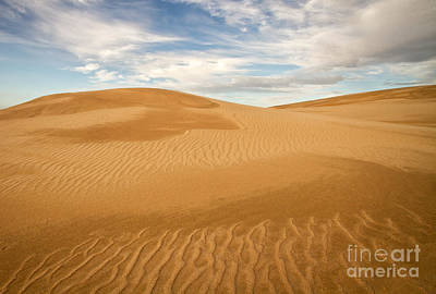 Photograph - Dunescape by Alice Cahill