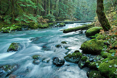 Olympic National Park Photograph - Dungeness River In Olympic National by James White