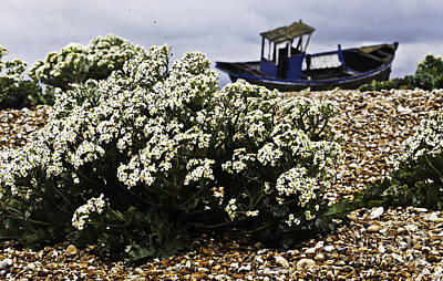Dungeness Seascape Art Print by Lesley Rigg