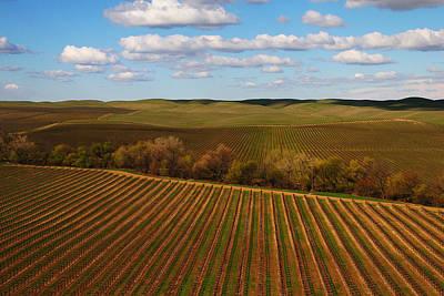 Photograph - Dunnigan Hills Vineyard by Robert Woodward