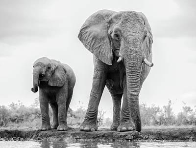 Baby Elephant Wall Art - Photograph - Duo by Jaco Marx