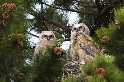 Janet Smith Photograph - Duowls by Janet Smith