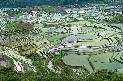 Peoples Republic Of China Photograph - Duoyishu Hani Rice Terrace Near Yuanyang by Tony Camacho