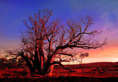 Durack's Boab Tree In Twilight Art Print