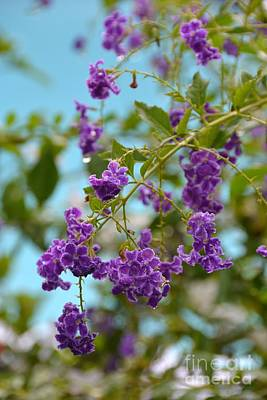 Photograph - Duranta- Fresh Morning by Darla Wood