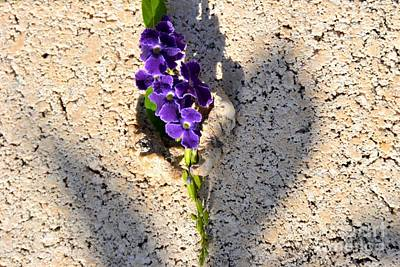 Photograph - Duranta- Shadow Play 1 by Darla Wood