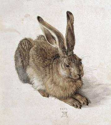 Durer, Albrecht 1471-1528. Hare. 1502 Art Print
