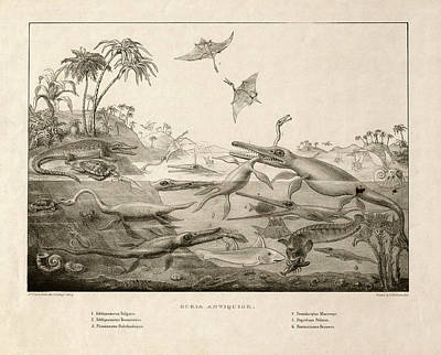 Plesiosaur Photograph - Duria Antiquior by Museum Of The History Of Science/oxford University Images
