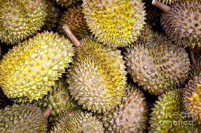 Durian Fruit Art Print by Tim Hester