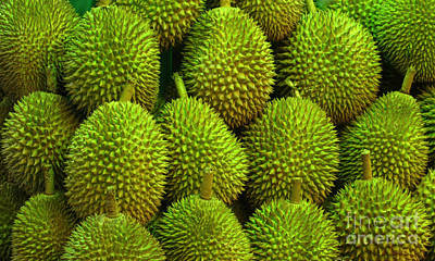 Photograph - Durian by Ranjini Kandasamy