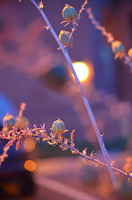 Photograph - Dusk Flowers by Deprise Brescia