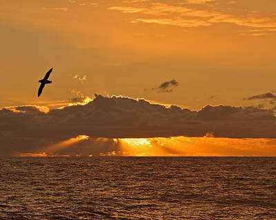 Photograph - Dusk On The Drake Passage by Tony Beck