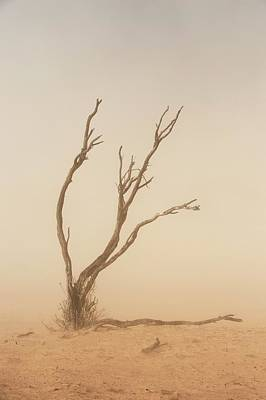 Dust Storm In The Auob Riverbed Art Print by Tony Camacho