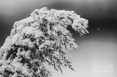 Photograph - Dusted In Snow by JT Lewis