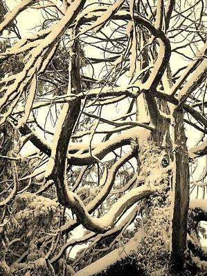 Photograph - Snow Dusted Limbs by Richard Brookes
