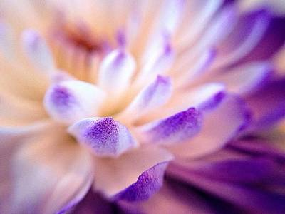 Photograph - Dusted With Violet - Triptych 3 Of 3 by Susan Maxwell Schmidt