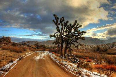 Joshua Tree Photograph - Dusting Of White by Ron Clark
