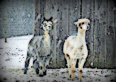Photograph - Dusty And Sterling by Kathy Sampson