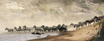 Migration Photograph - Dusty Crossing by Liz Leyden
