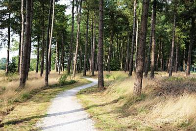 Photograph - Dutch Country Bicycle Path by Carol Groenen