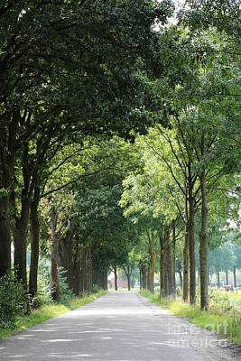 Trees Photograph - Dutch Landscape - Country Road by Carol Groenen