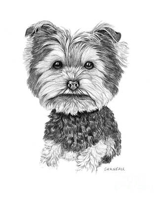 Yorkshire Terrier Wall Art - Drawing - Dutchie by Catherine Garneau