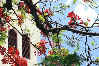 Photograph - Duval Street Flame Tree by Valerie Reeves