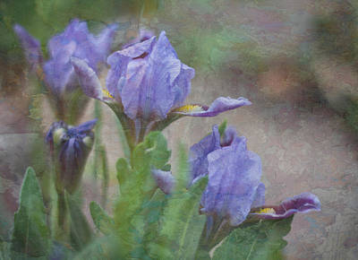 Art Print featuring the photograph Dwarf Iris With Texture by Patti Deters