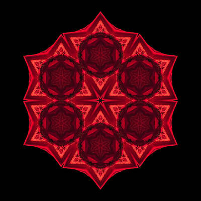 Print featuring the photograph Dying Amaryllis IIi Flower Mandala by David J Bookbinder