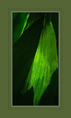 Photograph - Dynamic Light by Denis Lemay