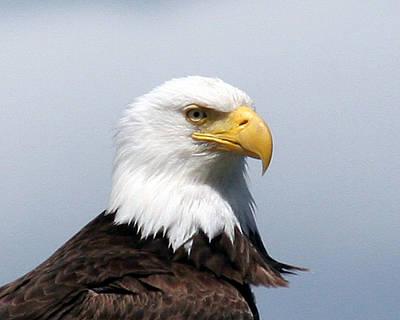 Eagle 1 Art Print by John Bushnell