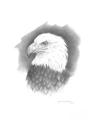Eagle Drawing - Eagle-1 by Lee Updike