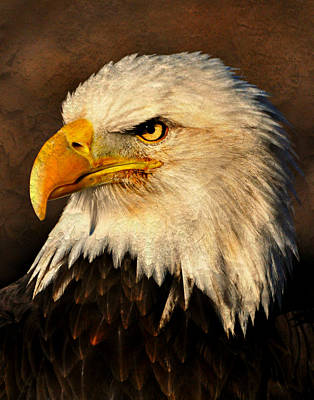 Photograph - Eagle 51 by Marty Koch